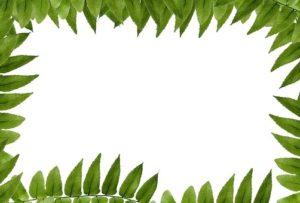 leaf-1691620__340